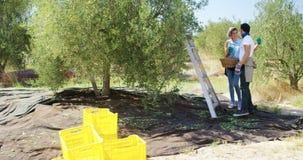 La tenencia sonriente de los pares cosechó aceitunas en la granja 4k almacen de video