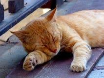 La tenerezza di un'isola smarrita Grecia Europa di Kos del gatto Immagini Stock