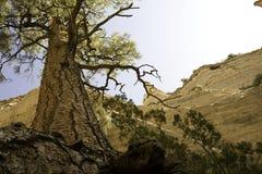 La tente de Kasha-Katuwe d'arbre oscille le monument Image libre de droits