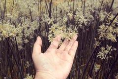 La tenuta d'annata della mano è fiori, ambiti di provenienza della natura Fotografie Stock