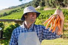 La tenuta dell'agricoltore ha raccolto le carote nel campo Immagine Stock