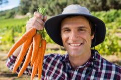 La tenuta dell'agricoltore ha raccolto le carote nel campo Immagine Stock Libera da Diritti