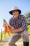 La tenuta dell'agricoltore ha raccolto le carote nel campo Fotografia Stock Libera da Diritti
