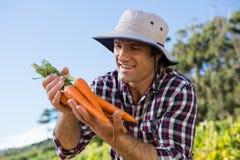 La tenuta dell'agricoltore ha raccolto le carote nel campo Immagini Stock Libere da Diritti