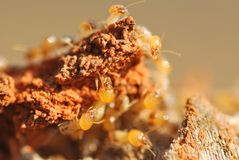 La termite Fotografia Stock Libera da Diritti