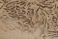 La termite strascica il paesaggio Immagine Stock