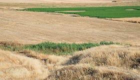 La terra dell'agricoltura con cereale ha raccolto i campi e l'erba verde Immagine Stock