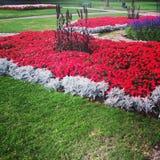 La terra ride in fiori Immagine Stock