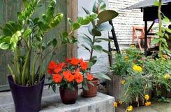 La terraza hermosa con mucho florece y bicicleta Foto de archivo