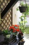 La terraza hermosa con mucho florece y bicicleta Imagen de archivo libre de regalías