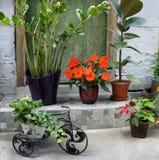 La terraza hermosa con mucho florece y bicicleta Imagenes de archivo