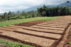 La terre agricole Images libres de droits