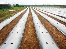 La terre agricole Photographie stock libre de droits