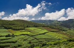 La terre agricole dans Nilgiris près d'Ooty Image libre de droits