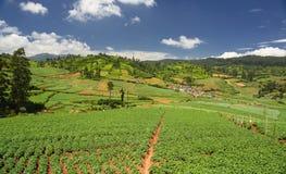 La terre agricole dans Nilgiris près d'Ooty Photographie stock libre de droits