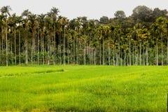 La terre agricole de rizières de Waynad Image libre de droits