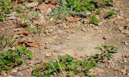La terre avec des pierres et des feuilles photographie stock