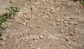 La terre avec des pierres et des usines photos stock