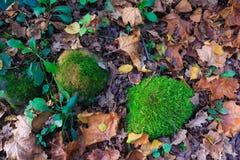 La terre avec les feuilles sèches et pierres avec de la mousse en automne dans la forêt Photo libre de droits