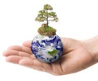 La terre avec un arbre dans une main Photos stock