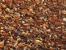 La terre couverte de feuilles d'automne illustration libre de droits