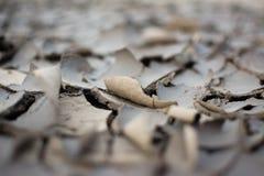 La terre criquée au ressort Fond et texture Images stock