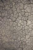 La terre criquée au ressort Fond et texture Photos libres de droits