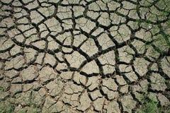 La terre criquée avec l'herbe survécue Image stock