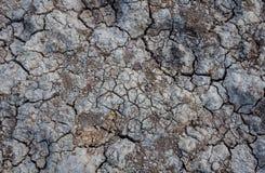 La terre criquée de texture Photographie stock
