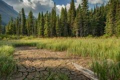 La terre criquée et longue herbe au parc national de glacier Photos libres de droits