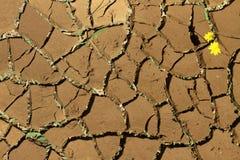 La terre criquée sèche Photo libre de droits