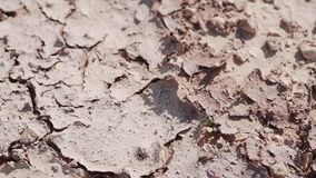 La terre criquée sèche dans le plan rapproché de désert La chaleur forte Une terre stérile clips vidéos