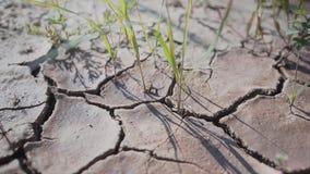 La terre criquée sèche très belle et authentique Largly cinématographique banque de vidéos