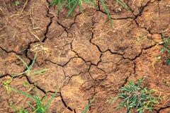 La terre criquée avec l'herbe Photographie stock libre de droits