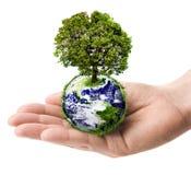 La terre de fixation de main avec l'arbre Photo stock