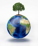 La terre de planète avec un arbre sur le dessus. Images libres de droits
