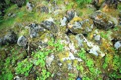 La terre de Tayga Photographie stock