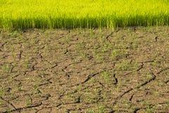 La terre et sécheresse sèches Images libres de droits