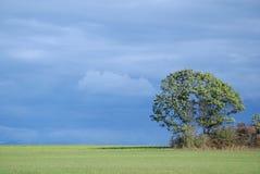 La terre hors de la ville de ferme de New York avec l'arbre avec un bleu a opacifié le ciel en automne Image stock