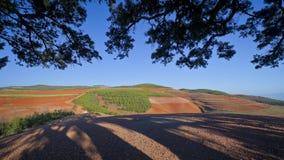 La terre rouge Photo stock