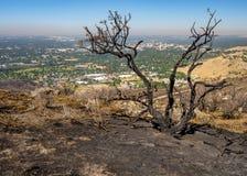 La terre roussie d'un feu et d'une ville de Boise Idaho images stock
