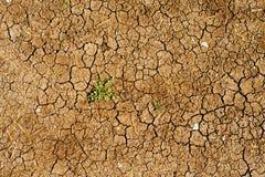 La terre sèche avec un élevage de mauvaise herbe Image libre de droits