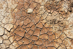 La terre sèche et criquée Photos stock