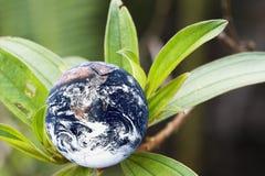 La terre vivante de planète Photographie stock libre de droits