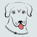la testa del cane Fotografia Stock Libera da Diritti