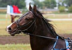 La testa del cavallo in primo piano di profilo Fotografie Stock Libere da Diritti