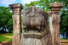 La testa del leone di pietra di urlo in King& x27; camera del Consiglio di s del sito archeologico di Nissanka Malla Palace Immagine Stock Libera da Diritti