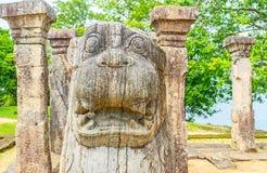 La testa del leone di urlo Immagine Stock