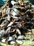La testa del pesce essiccato Fotografia Stock