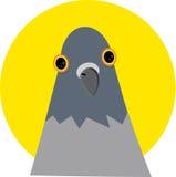 La testa del piccione senza corpo Fotografia Stock Libera da Diritti